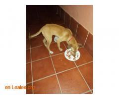 Perro encontrado en Ojos de garza  - Imagen 1