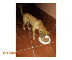 Perro encontrado en Ojos de garza  - Imagen 2