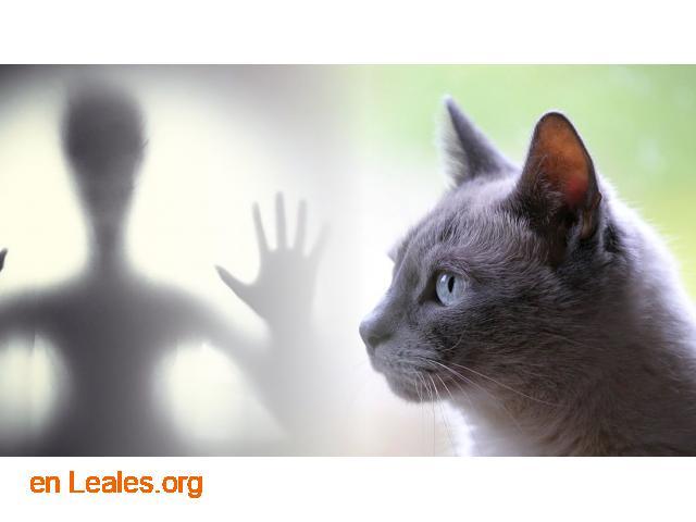 Los gatos te protegen de los espíritus - 1