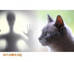 Los gatos te protegen de los espíritus - Imagen 1