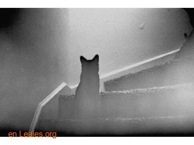 Los gatos te protegen de los espíritus - 2