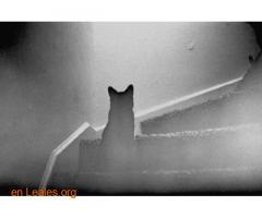 Los gatos te protegen de los espíritus - Imagen 2
