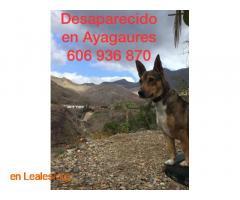 PERDIDO EN AYAGAURES. LO HAS VISTO?   - Imagen 4