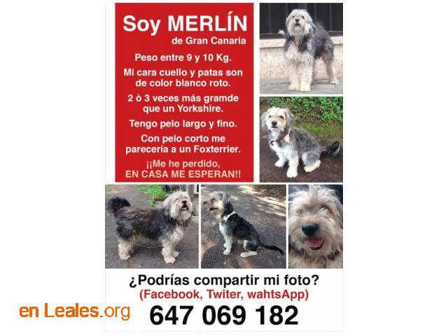 Merlín se ha perdido en G.C.