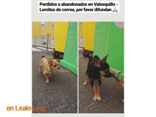 ENCONTRADOS EN VALSEQUILLO LOS CONOCES? - 2