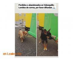 ENCONTRADOS EN VALSEQUILLO LOS CONOCES? - Imagen 2