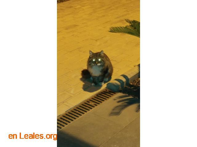 Gatito encontrado en centro de trabajo - 1