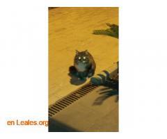Gatito encontrado en centro de trabajo - Imagen 1
