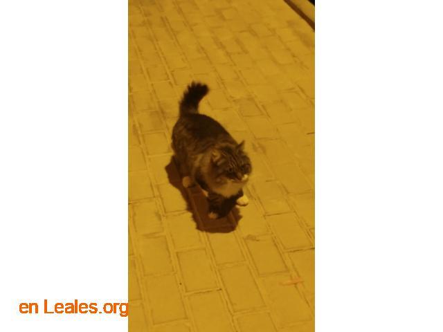 Gatito encontrado en centro de trabajo - 2