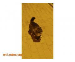 Gatito encontrado en centro de trabajo - Imagen 2