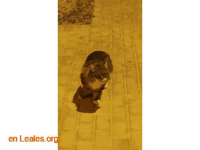 Gatito encontrado en centro de trabajo - 3
