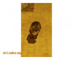 Gatito encontrado en centro de trabajo - Imagen 3