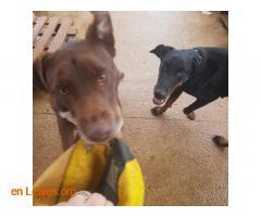 Browny en adopción - Imagen 8