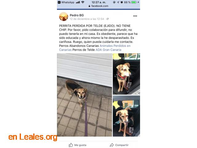 ENCONTRADA EN TELDE.  LA CONOCES?   - 3