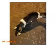 Transporte urgente gatito herido - Imagen 1