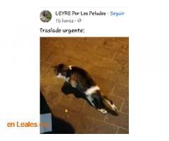 Transporte urgente gatito herido - Imagen 2