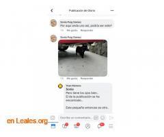 ENCONTRADO EN VECINDARIO.  LO CONOCES? - Imagen 4