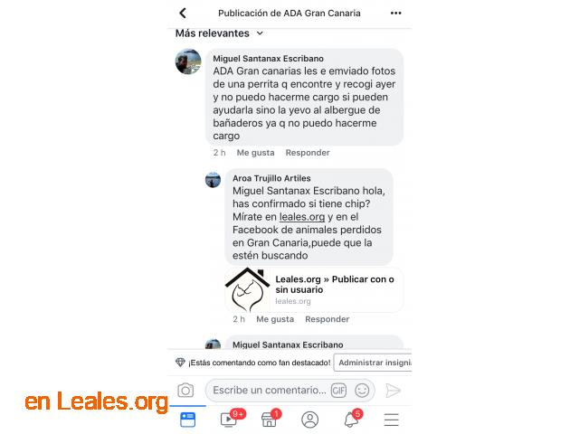 ENCONTRADA EN ARUCAS. URGENTE ACOGIDA  - 5
