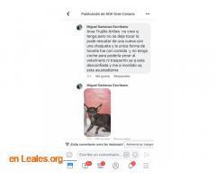 ENCONTRADA EN ARUCAS. URGENTE ACOGIDA  - Imagen 6