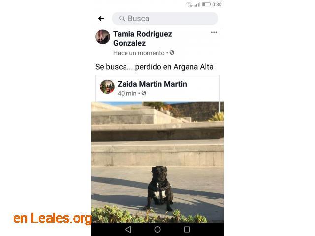 ver foto perro perdido