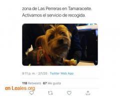 ENCONTRADO EN TAMARACEITE.  LO CONOCES? - Imagen 3
