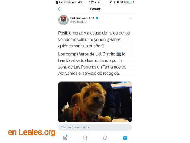 ENCONTRADO EN TAMARACEITE.  LO CONOCES? - 4