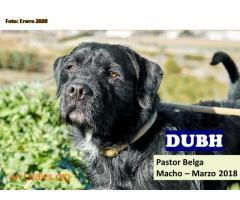 DUBH - Imagen 1