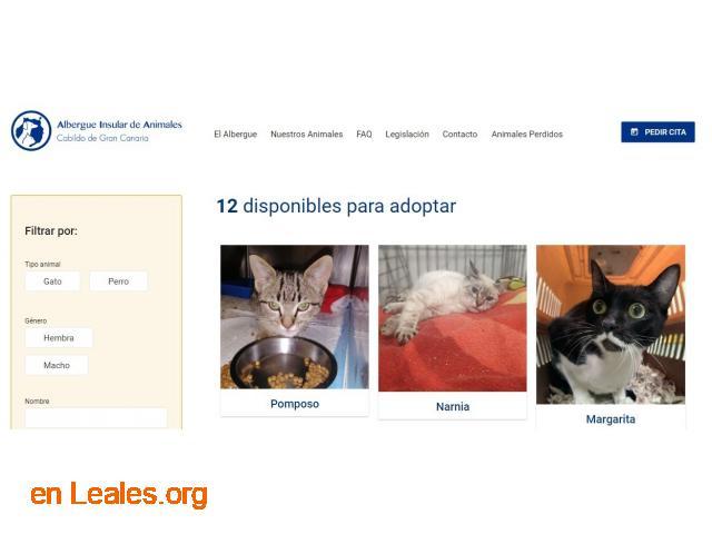 Denuncia al CabildoGC por masacre felina - 1