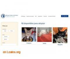 Denuncia al CabildoGC por masacre felina - Imagen 1