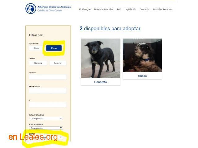 Denuncia al CabildoGC por masacre felina - 2