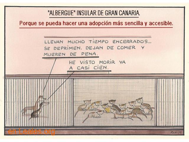 Denuncia al CabildoGC por masacre felina - 3