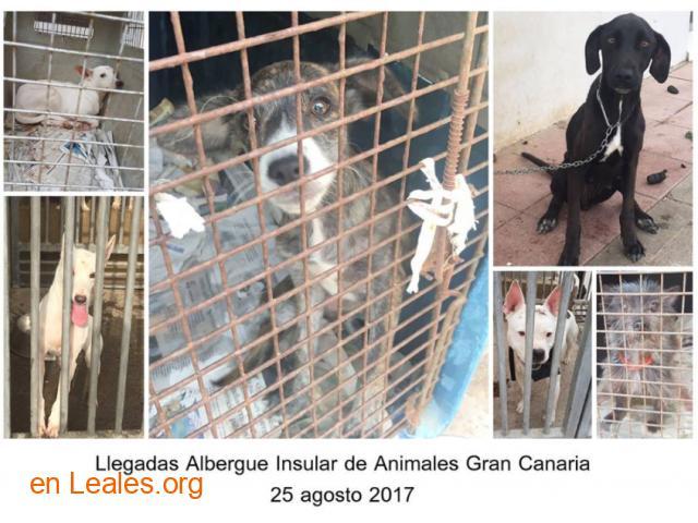Denuncia al CabildoGC por masacre felina - 6