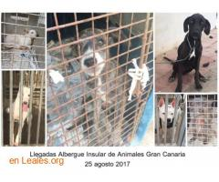 Denuncia al CabildoGC por masacre felina - Imagen 6
