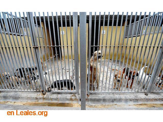 Denuncia al CabildoGC por masacre felina - 7