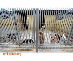 Denuncia al CabildoGC por masacre felina - Imagen 7