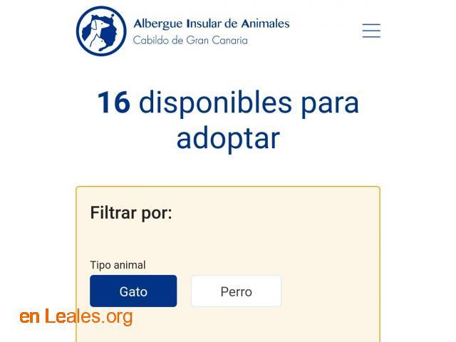 Denuncia al CabildoGC por masacre felina - 10