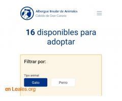 Denuncia al CabildoGC por masacre felina - Imagen 10