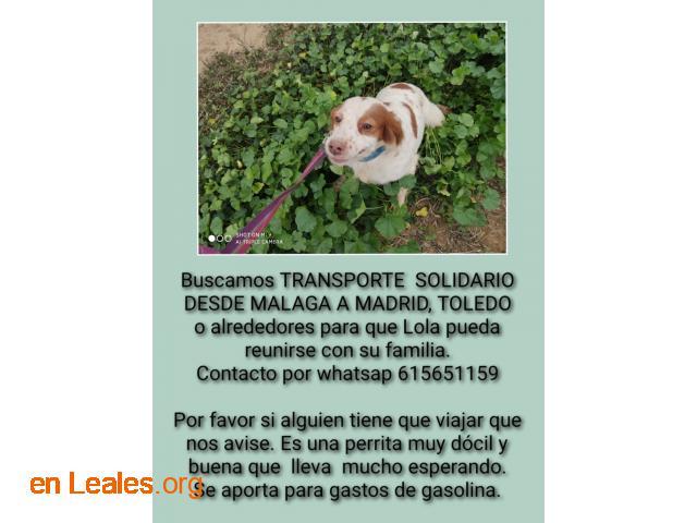 URGENTE! Transporte solidario para Lola - 1