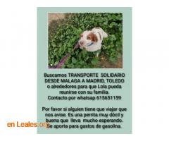 URGENTE! Transporte solidario para Lola - Imagen 1