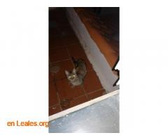 ver foto - Imagen 2