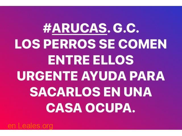 LOS PERROS SE COMEN ENTRE ELLOS. ARUCAS. - 1
