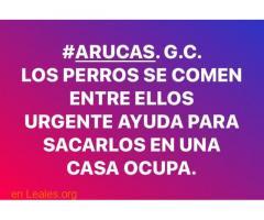 LOS PERROS SE COMEN ENTRE ELLOS. ARUCAS. - Imagen 1
