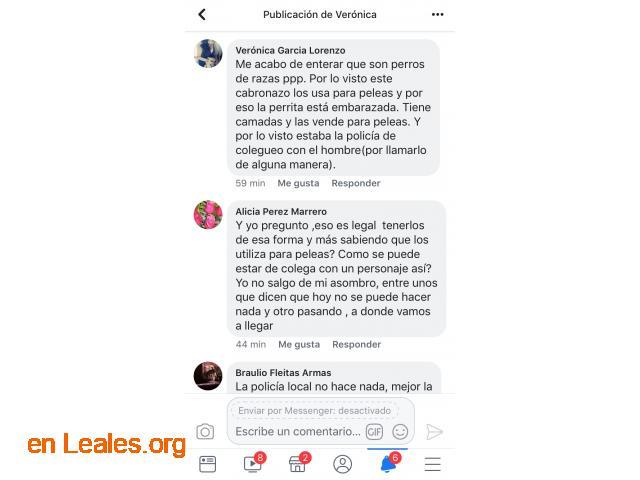 LOS PERROS SE COMEN ENTRE ELLOS. ARUCAS. - 4