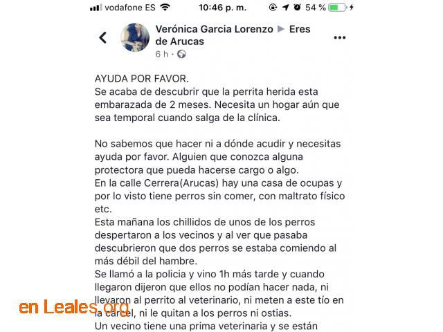 LOS PERROS SE COMEN ENTRE ELLOS. ARUCAS. - 5