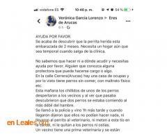 LOS PERROS SE COMEN ENTRE ELLOS. ARUCAS. - Imagen 5