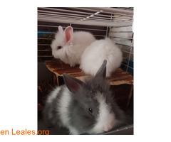 Hemos tenido una camada de conejos toy - Imagen 2