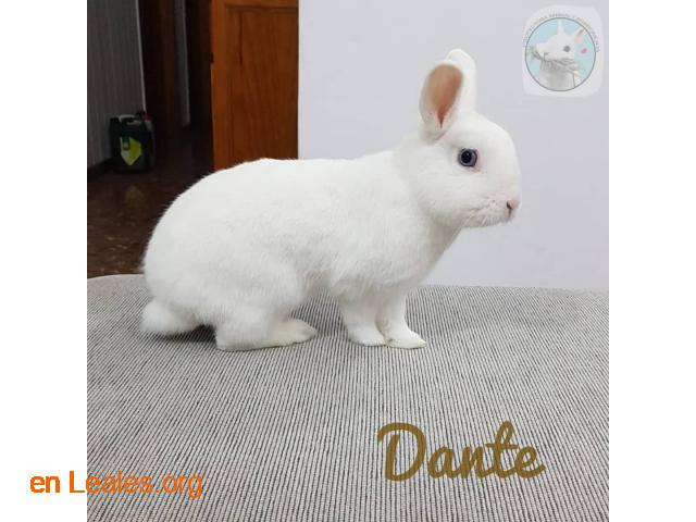 Dante - 1
