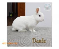 Dante - Imagen 1