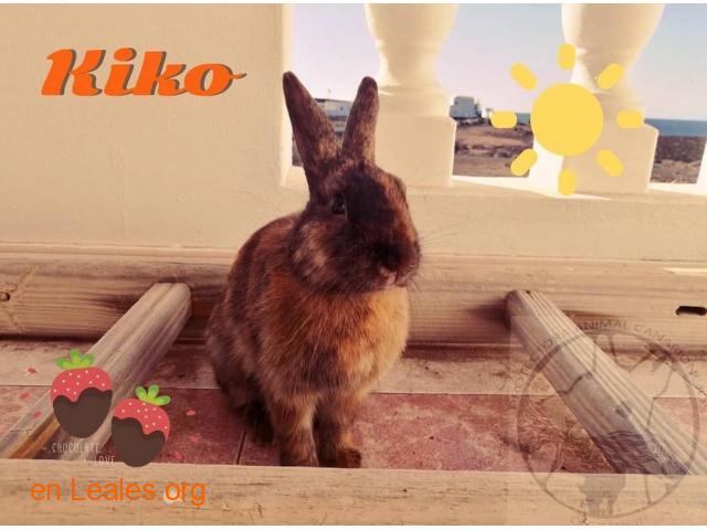 Kiko - 1
