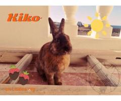 Kiko - Imagen 1